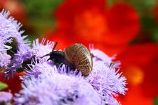Snail On A Flower In A Garden Of A Private House Stock Photography
