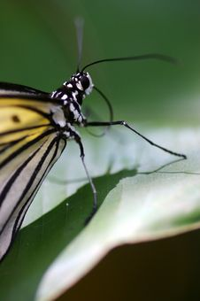 Free Butterflies Royalty Free Stock Photography - 3717567