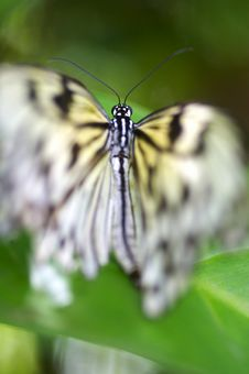 Free Butterflies Royalty Free Stock Image - 3717586