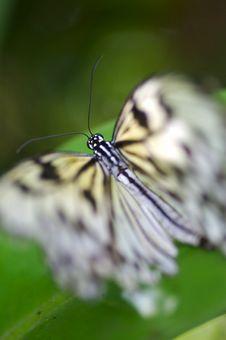 Free Butterflies Stock Photos - 3717593
