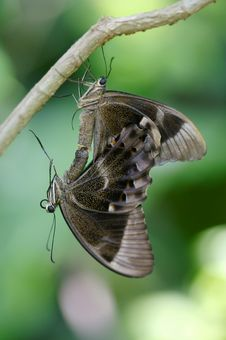 Free Butterflies Stock Photography - 3717602