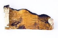 Free Birch Bark Stock Images - 3717814