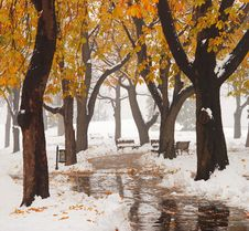 Free Snow At The Park Royalty Free Stock Image - 3718236