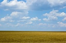 Free Wheat Field Royalty Free Stock Images - 3718869