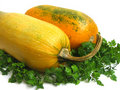 Free Squashes And Greens Stock Images - 3729174
