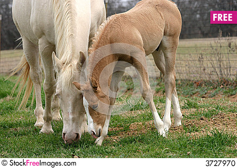 Free Mare And Foal Stock Photo - 3727970