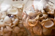 Free Shells Decoration Royalty Free Stock Photo - 3721745