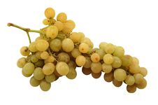 Free Bunch Of Grapes Royalty Free Stock Photography - 3721857