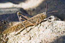 Free Grasshopper On Sand Stock Photos - 3722603