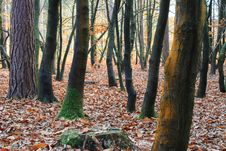 Free Autumn Forest Wild Royalty Free Stock Photography - 3723767