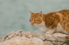 Free Ginger Cat Royalty Free Stock Photo - 3724015