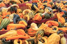 Free Autumn Gourds Stock Image - 3725791