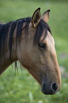 Free Horse Stock Image - 3726161