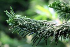 Free Xmas Tree Stock Photos - 3726273