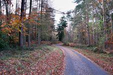 Free Autumn Woods Stock Image - 3727131
