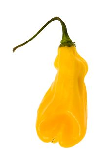 Free Hot Pepper Royalty Free Stock Photos - 3728348