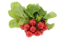 Free Fresh Radish Stock Photos - 3728353