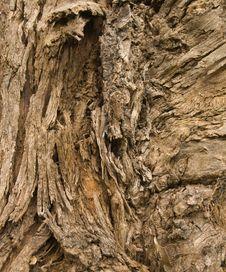 Free Tree Bark Stock Photography - 3733202