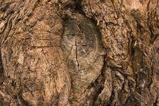 Free Tree Bark Stock Images - 3733214