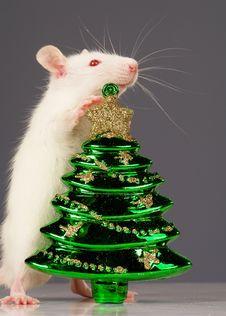 Free Rat Stock Image - 3734931