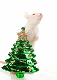 Free Rat Stock Photography - 3734932