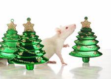Free Rat Stock Photo - 3734940