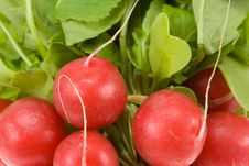Free Fresh Radish Background Stock Photos - 3735393