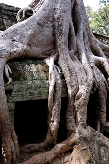 Free Ta Prohm, Angkor Wat, Cambodia Royalty Free Stock Photo - 3735475