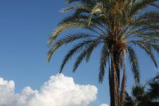 Free Palms Stock Image - 3735831