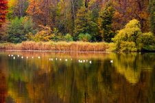 Free Autumn Lake Royalty Free Stock Photography - 3738197
