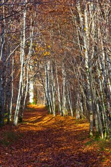 Free Autumn Forest Stock Images - 3738204
