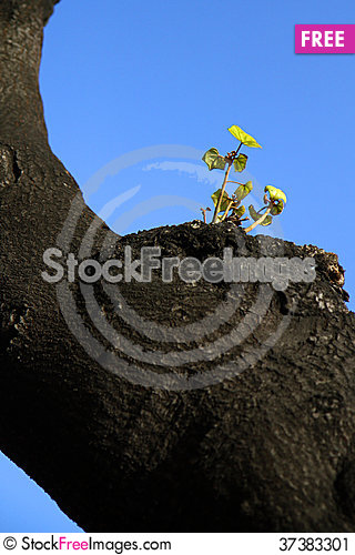 Free Green Leaves Emerged From Old Tree Stock Image - 37383301