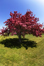 Free Tree Blossoms In Spring Royalty Free Stock Images - 3740429
