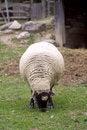 Free Farm Animals Stock Photos - 3747773