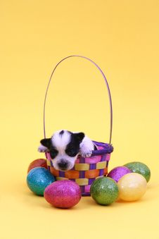 Free Puppy In Easter Basket Royalty Free Stock Photos - 3740108