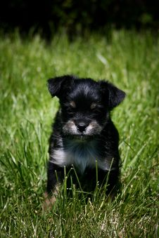 Free Black Puppy Stock Photos - 3740243