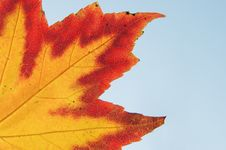 Free Maple Leave Stock Photo - 3740520