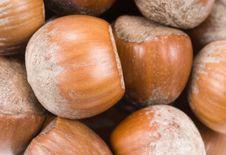 Free Hazelnuts Royalty Free Stock Images - 3743579