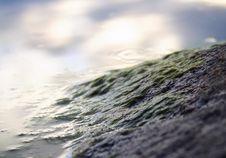 Free Seagrass On Stone Royalty Free Stock Photo - 3743845