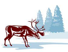 Free Reindeer In A Winter Scene Stock Photos - 3746003