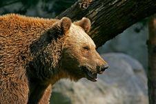 Free Bear Royalty Free Stock Photos - 3746038