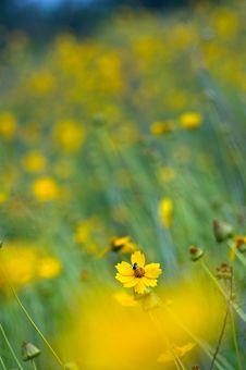 Free Wild Flower Stock Photography - 3746212