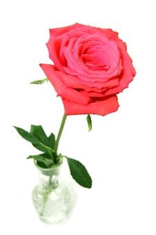 Free Red Rose In Vase Stock Photography - 3746502
