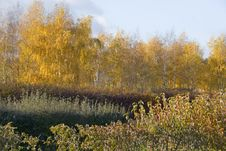 Free Autumn Forest Stock Image - 3746671