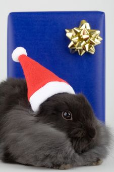 Grey Bunny And A Blue Gift Box Royalty Free Stock Photos
