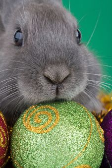 Free Bunny And Christmas Decorations Royalty Free Stock Photos - 3748448