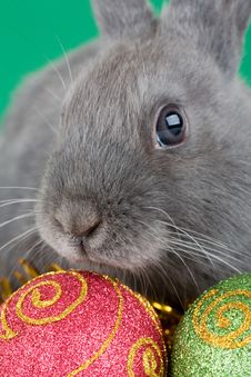 Free Bunny And Christmas Decorations Royalty Free Stock Photography - 3748467
