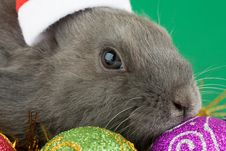 Free Bunny And Christmas Decorations Royalty Free Stock Image - 3748476