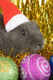 Free Grey Bunny And Christmas Decorations Stock Image - 3748531
