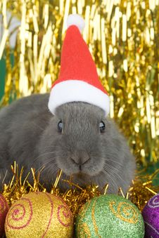 gray rabbit and christmas decoration isolated free grey bunny and christmas decorations royalty free stock images 3748549